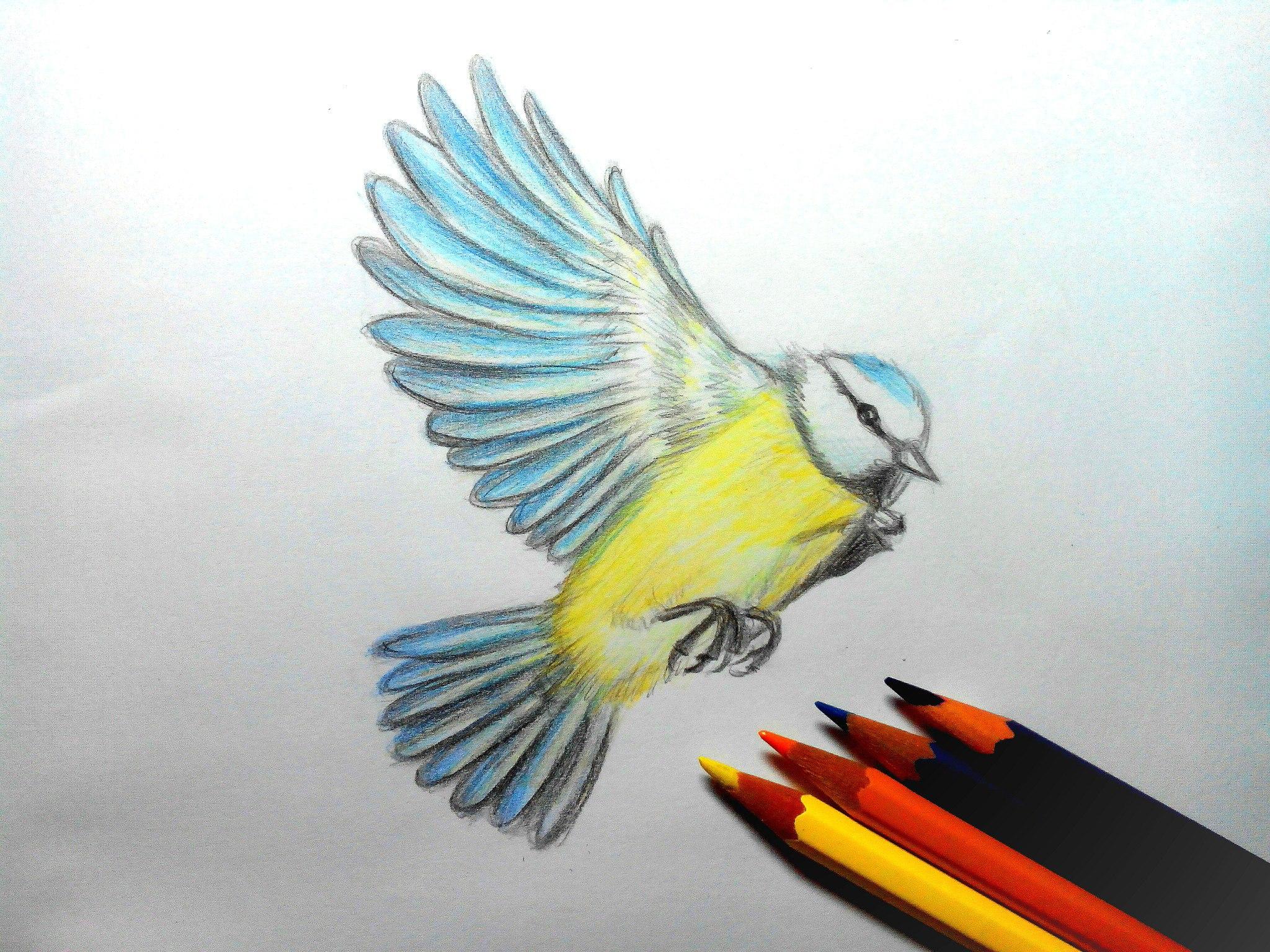 Как нарисовать птицу цветными карандашами?