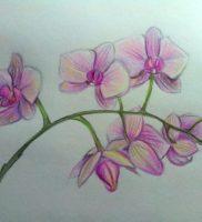 Как нарисовать орхидею цветными карандашами поэтапно