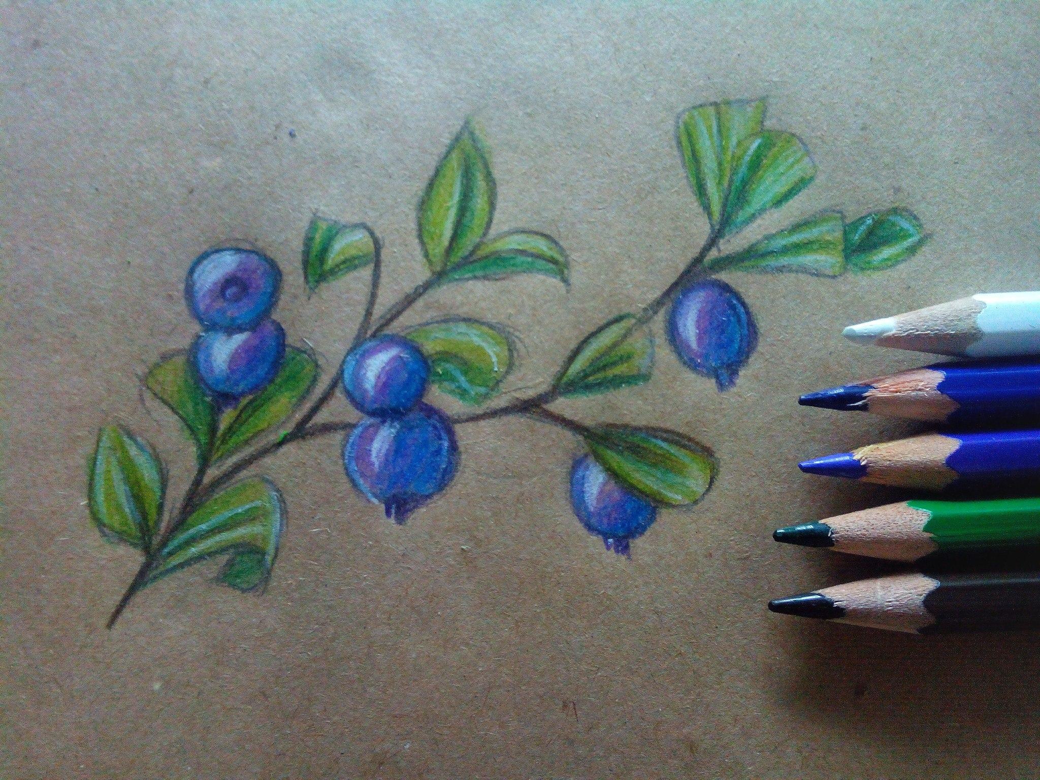 Как нарисовать чернику карандашом поэтапно