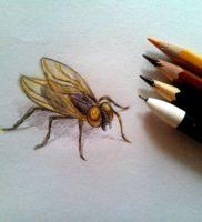 Как нарисовать муху карандашом поэтапно