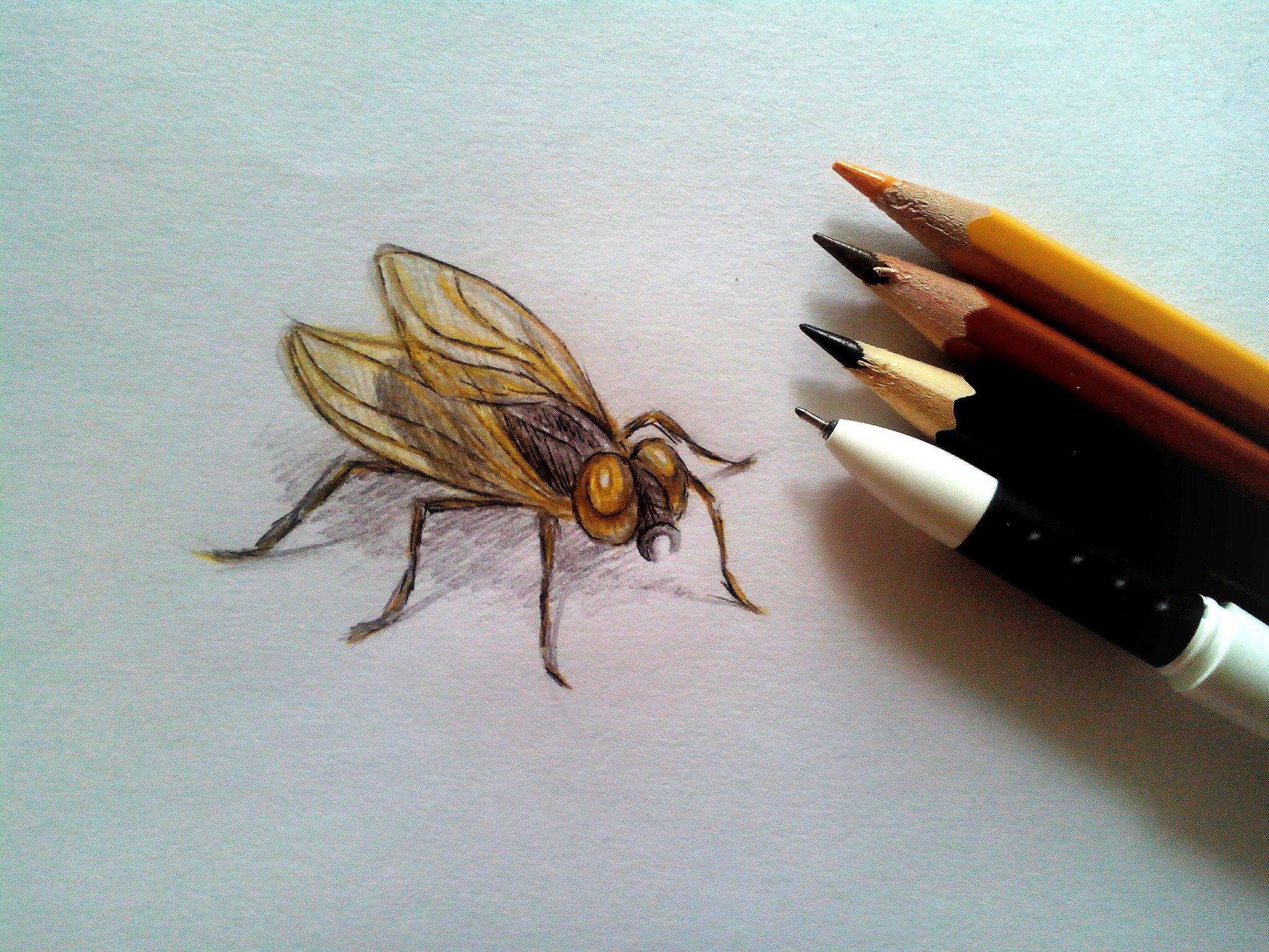 Как нарисовать муху карандашом поэтапно?