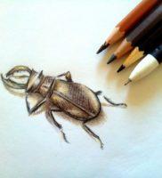 Как нарисовать жука карандашом поэтапно