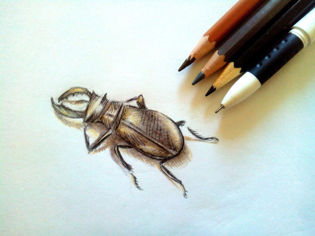 Как нарисовать жука карандашом поэтапно?