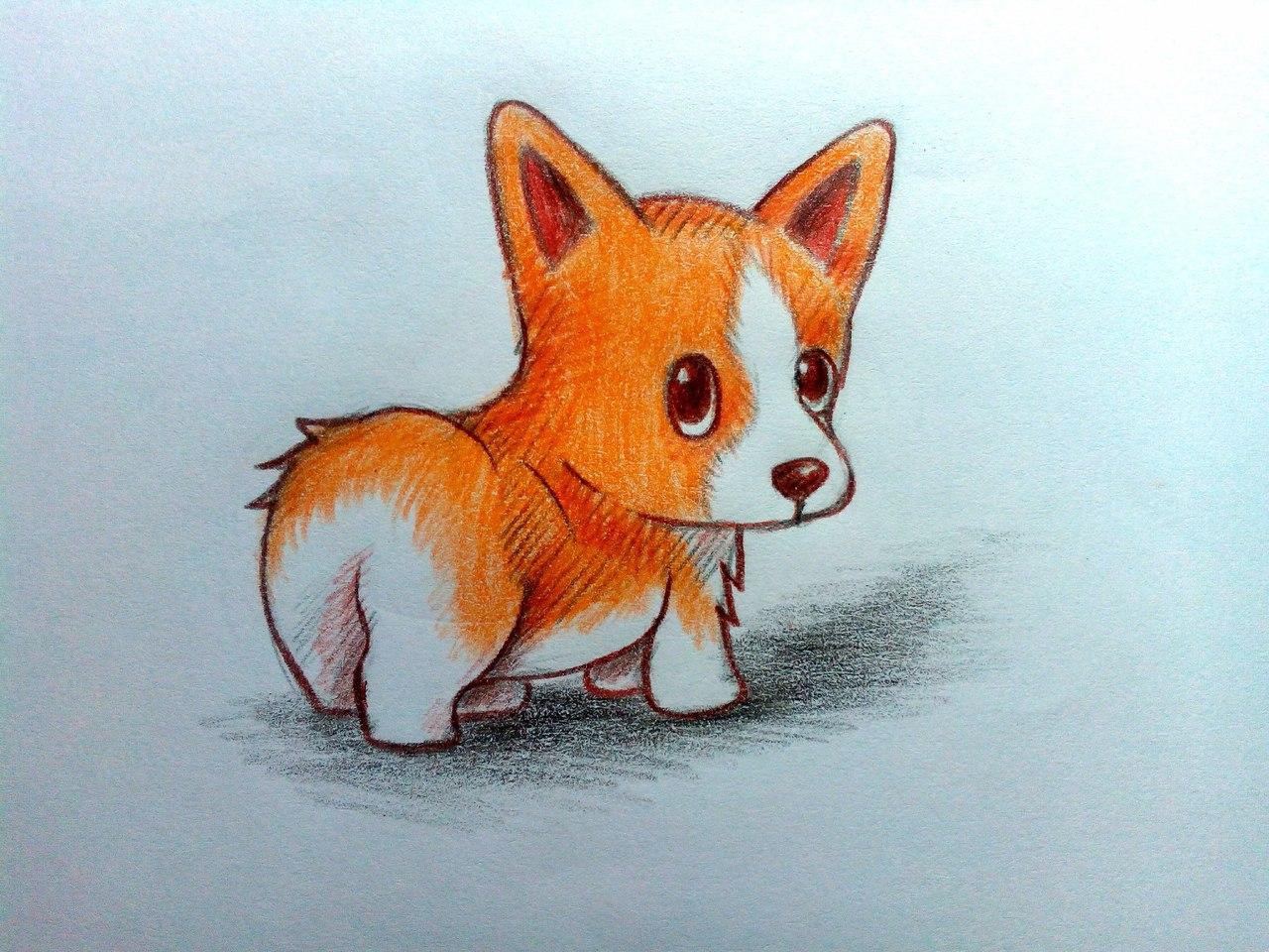 Как нарисовать собаку карандашом поэтапно?