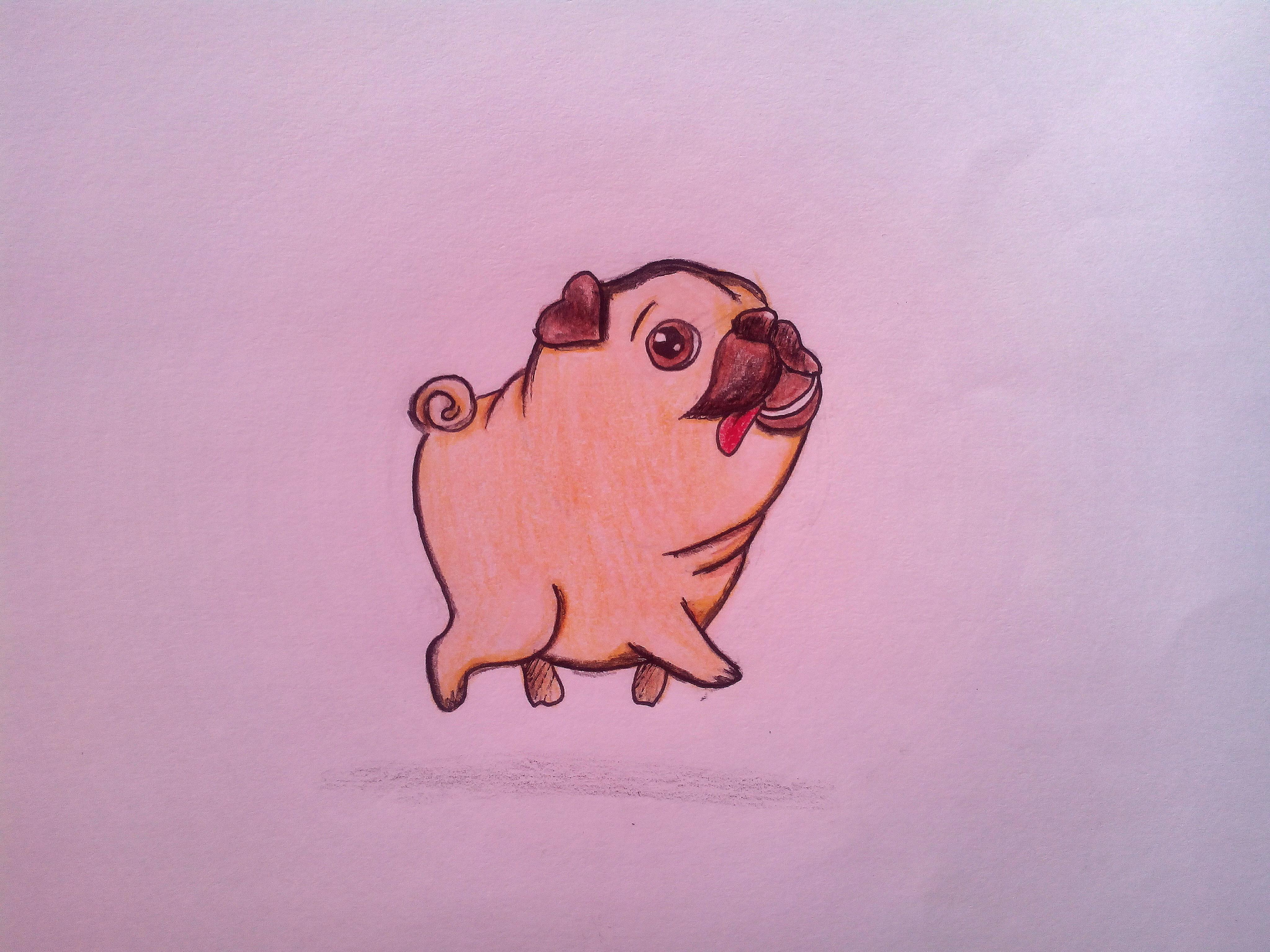 Как нарисовать мопса карандашом поэтапно