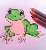Как нарисовать жабу карандашом поэтапно