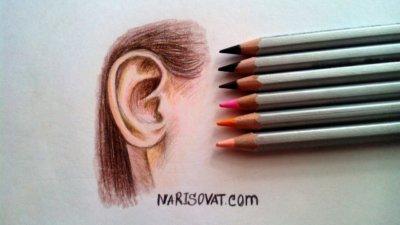 Как нарисовать ухо карандашом поэтапно?