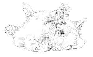 Как-нарисовать-котёнка-карандашом-поэтапно-5