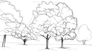 Как-нарисовать-клен-карандашом-поэтапно-3