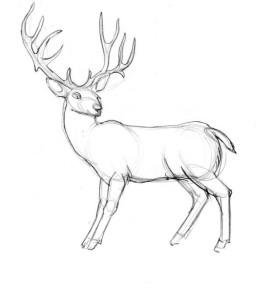 Как-нарисовать-оленя-карандашом-поэтапно-4