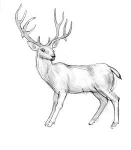 Как-нарисовать-оленя-карандашом-поэтапно-5