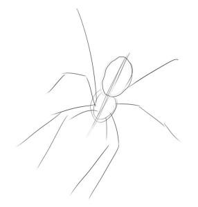 Как-нарисовать-паука-карандашом-поэтапно-1
