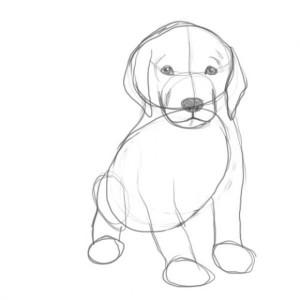 Как-нарисовать-щенка-2