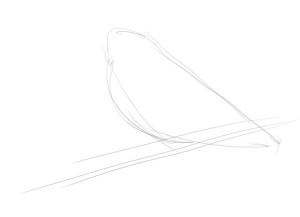 Как-нарисовать-снегиря-карандашом-поэтапно-1