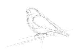Как-нарисовать-снегиря-карандашом-поэтапно-2