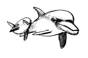 как-нарисовать-дельфина-4