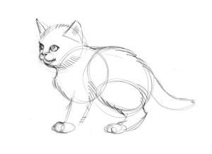 как-нарисовать-кота-поэтапно-4