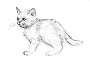 как-нарисовать-кота-поэтапно-5