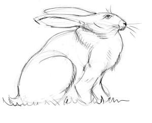 как-нарисовать-зайца-4