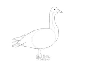 Как-нарисовать-гуся-карандашом-поэтапно-3