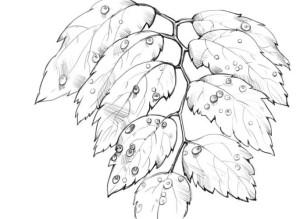 Как-нарисовать-капли-карандашом-поэтапно-4