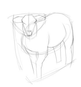 Как-нарисовать-овцу-карандашом-поэтапно-2