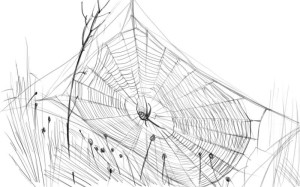 Как-нарисовать-паутину-карандашом-поэтапно-5