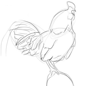 Как-нарисовать-петуха-карандашом-поэтапно-3