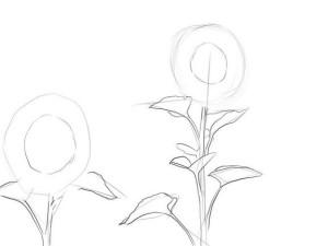 Как-нарисовать-подсолнух-карандашом-поэтапно-2
