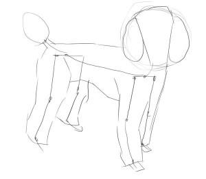 Как-нарисовать-пуделя-карандашом-поэтапно-2