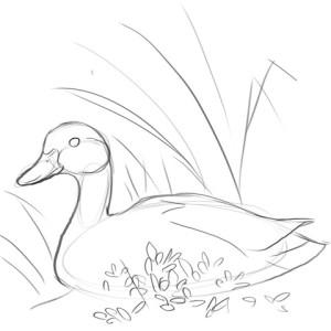 Как-нарисовать-утку-карандашом-поэтапно-3
