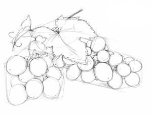 Как-нарисовать-виноград-карандашом-поэтапно-4