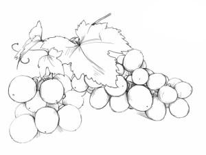 Как-нарисовать-виноград-карандашом-поэтапно-5