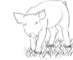 как-нарисовать-свинью-3