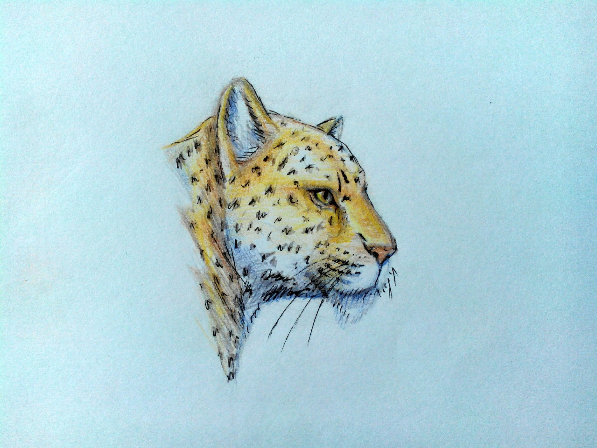 нарисованный леопард