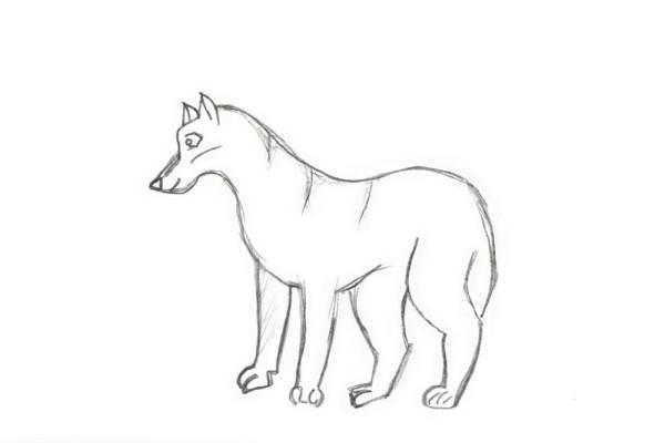 Kak-narisovat-volka-4