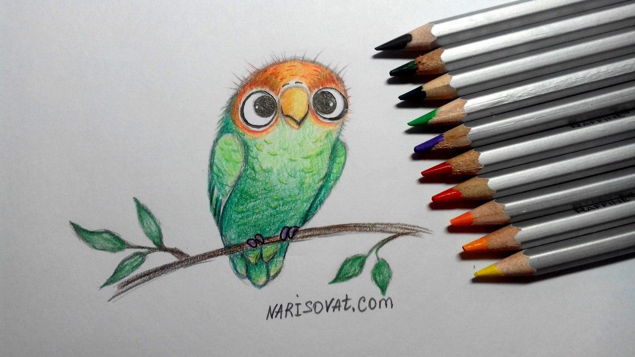 нарисованный попугай