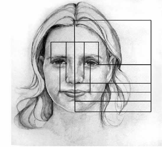 facialproportions